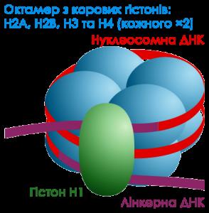 Darekk2 [CC BY-SA 3.0 ]