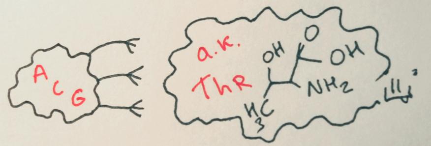 Приклад триплету, що відповідає амінокислоті треоніну