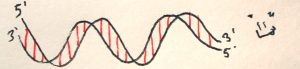 p-4-dna-dh1