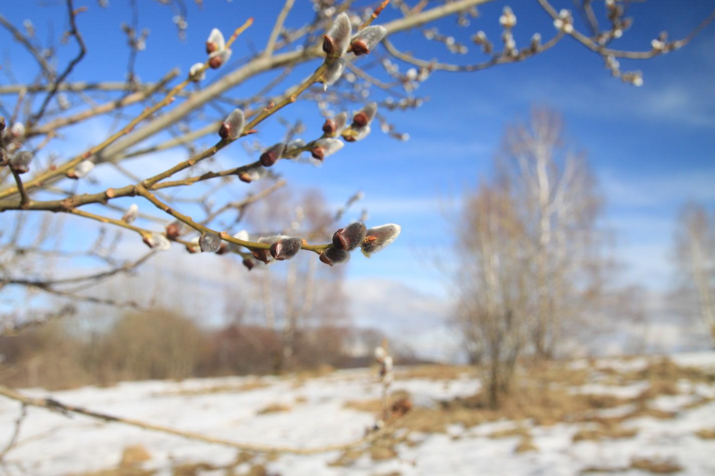 Українців попередили про пориви вітру